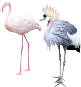 左(オオフラミンゴ) 右(ホオジロカンムリヅル)