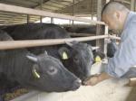 赤身のうまさを追求 新たな和牛生産技術の開発へ