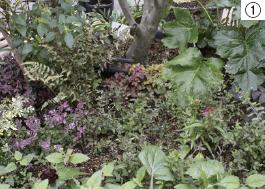 寒い冬は植物が休眠状態に 土づくり・剪定で春に備えて