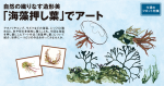 自然の織りなす造形美 「海藻押し葉」でアート