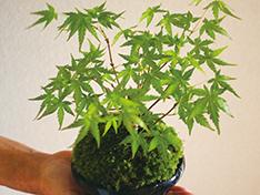 今日から始める ボタニカルライフ ミニ盆栽の作り方