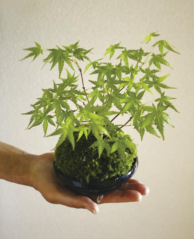 日本古来から伝わる草木を自然の風景を表現するように鉢に植え、葉姿や枝ぶりなどを楽しむ「盆栽」。今、手のひらに収まってしまうくらい小さな盆栽が女性の間でじわじわとブームになっています。和風だけでなく、洋風の部屋にもぴったり。植物の種類と鉢の組み合わせで自分らしくアレンジしてみては。