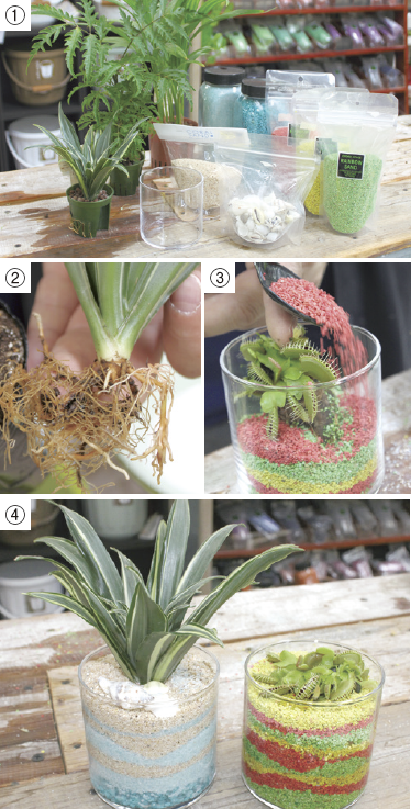 親子で楽しむガーデニング・ライフ ~夏編~ カラーサンドで植物をおしゃれに グラスを使ったアート作品