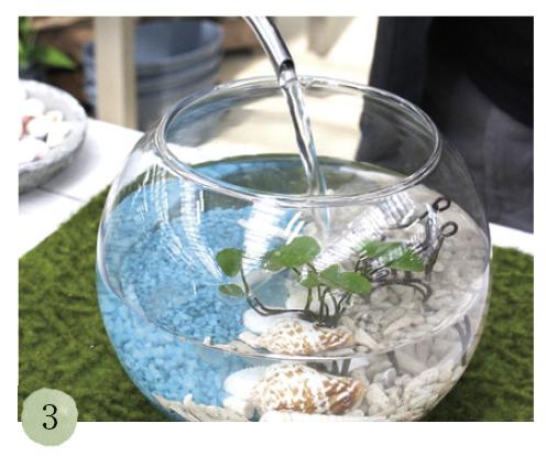ピンセットで貝殻、スターフィッシュ、好みの小物を配置。上からゆっくりと水を注ぎます。水は必ず日当たりの良い場所に半日ほど置いた水を使いましょう
