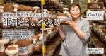 和歌山食物語、生産者を訪ねて 龍神生しいたけ