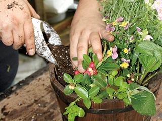3.培養土を苗の隙間から注ぐようにいれます。食用花はサラダやパスタの彩りに使うなど、活用法がたくさん。好みの野菜やハーブ、花を植えてください