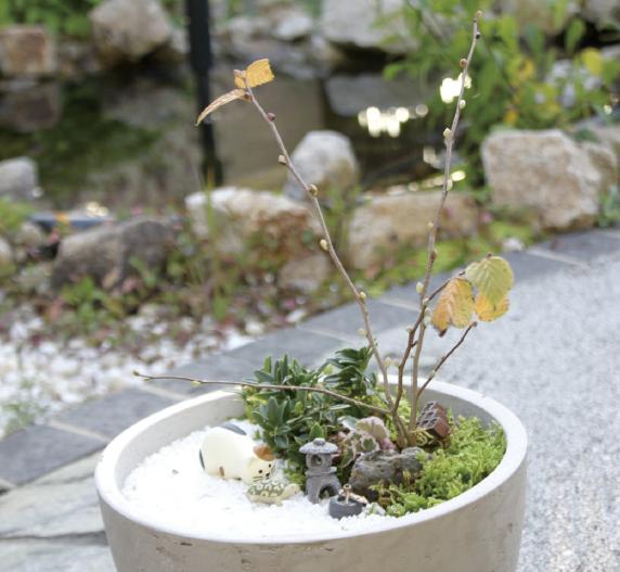日本庭園には、水を使わずに、砂やコケで海や山のある風景を表現し、自然の風景に見立てて庭を造るという考えがあります。四季折々の自然を感じながら、空間全体を楽しめるのが魅力の一つ。でも、実際に庭園を造るのは場所も時間も必要。そこで今回は、植木鉢に小さな日本庭園を造る方法を紹介します。