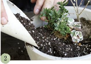 鉢に底石を敷き、土、肥料を入れます。苗木は、奥に背の高い苗、手前に低い苗を入れ、バランスを見ながら配置