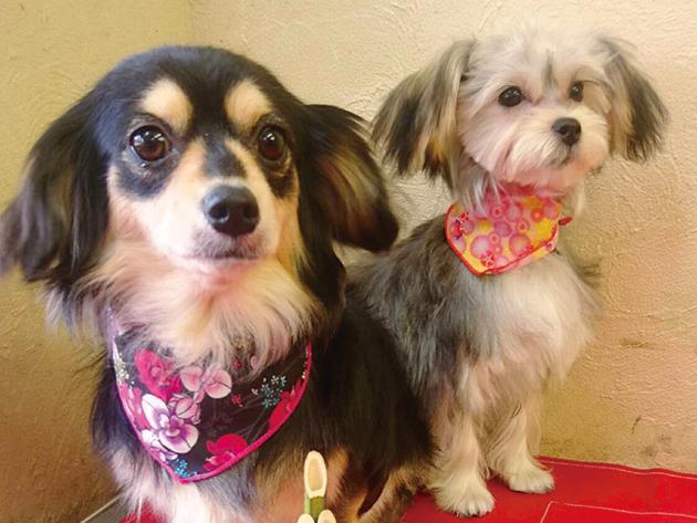 2月末日までオープニングキャンペーン ふわふわの仕上がりに愛犬も飼い主も大満足