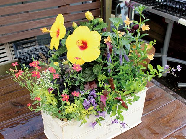 今日から始める ボタニカルライフ センスが光る寄せ植え 〜夏の庭に彩り編〜