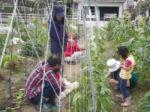 市民と農家をつなぐ農業体験農園 この春、新たに2カ所でスタート 2月10日(土)、JAわかやま中央営農センターで説明会実施
