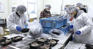 工場内の生産工程はほぼ機械で行いますが、収穫と選別、包装は手作業で