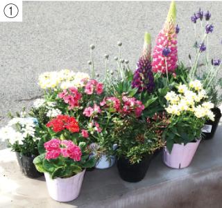 小さいスペースで楽しむガーデニング【春編】 苗の高低、色合わせを工夫 イングリッシュガーデンのような庭に