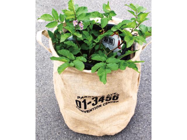 プランターで楽しむ家庭菜園【秋編】<br>家庭料理の定番、ジャガイモ 培養土の袋などで栽培