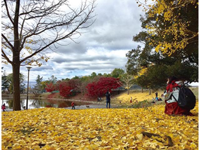 四季折々・花と緑と紅葉と