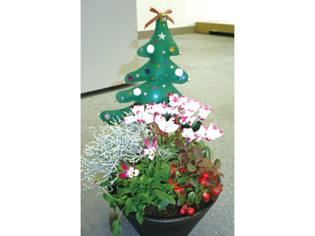 クリスマス寄せ植え教室