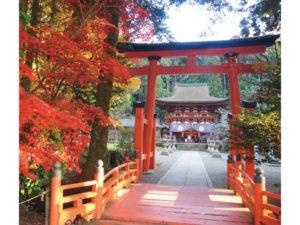 紅葉に彩られる丹生都比売神社