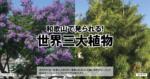 和歌山で見られる!世界三大植物