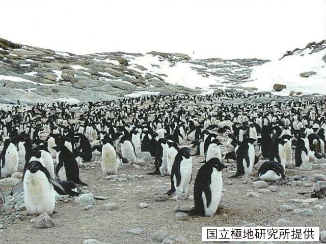紅葉と南極ペンギン ③