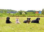 緑あふれるゆったりとした場所に移転 訓練士が愛犬をトレーニング