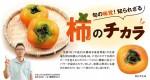 旬の味覚!知られざる柿のチカラ