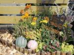 小さいスペースで楽しむガーデニング【秋編】紅葉や赤い実など、変化を楽しんで 黄やオレンジで明るい雰囲気に