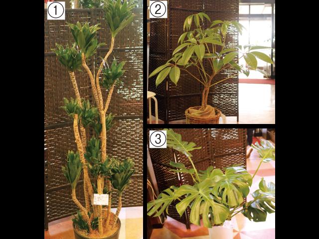 家の中で楽しもう!<br/> インテリアグリーン 春から始める、植物のある暮らし<br/>リビングルームを癒やしの空間に