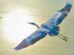 加茂川に集う野鳥たち